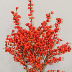 Magical® Showtime Winterberry Holly