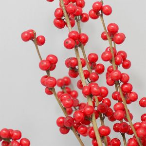 Magical® Winter Jewel Winterberry Holly