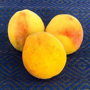 Muir Peach Tree