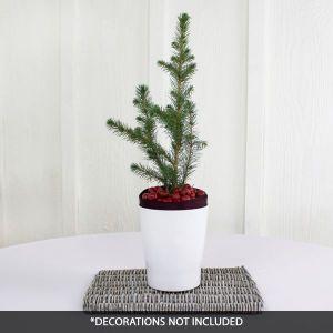 Norway Spruce Tabletop Christmas Tree