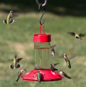 Songbird Essentials 16 Ounce Red Dr. JB's Hummingbird Feeder