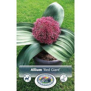 Red Giant Allium