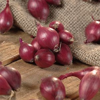 Red Karmen Onion