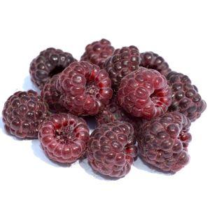 Royalty Raspberry Bush