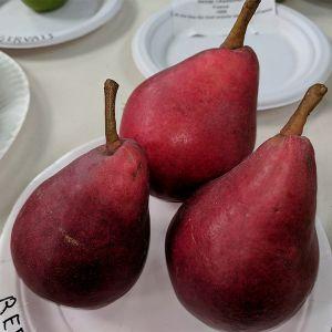 Sensation Red Bartlett Pear Tree