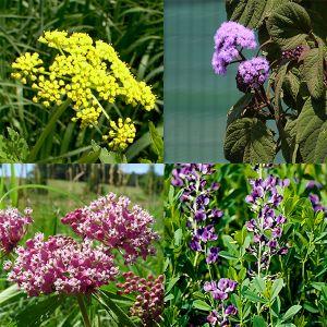 Spring Rain Garden Pocket Garden