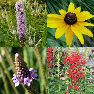 Summer Rain Garden Pocket Garden