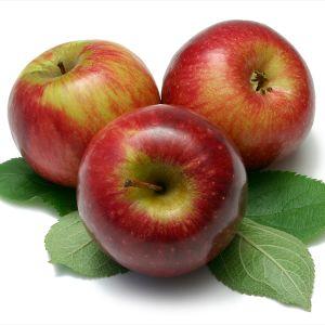 Sundowner Apple Tree