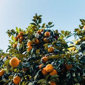 Bouquet de Fleurs Orange Tree