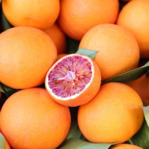 Tarocco Blood Orange Tree