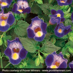 Catalina® Midnight Blue Wishbone Flower