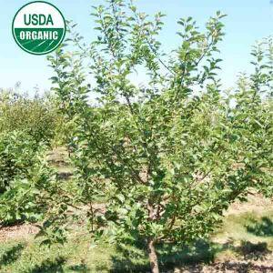 USDA Organic Enterprise Apple