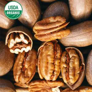USDA Organic 'Stuart' Pecan Tree