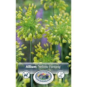 Yellow Fantasy Allium