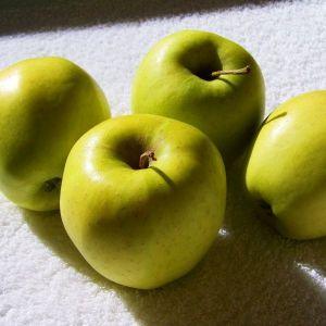 Ginger Gold Apple Tree