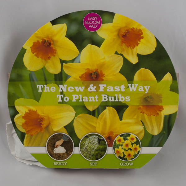 Fortissimo Daffodil Easy Bloom Pad