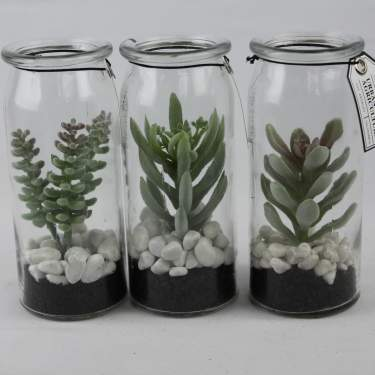 Image of 3 Assorted Glass Jar Succulents