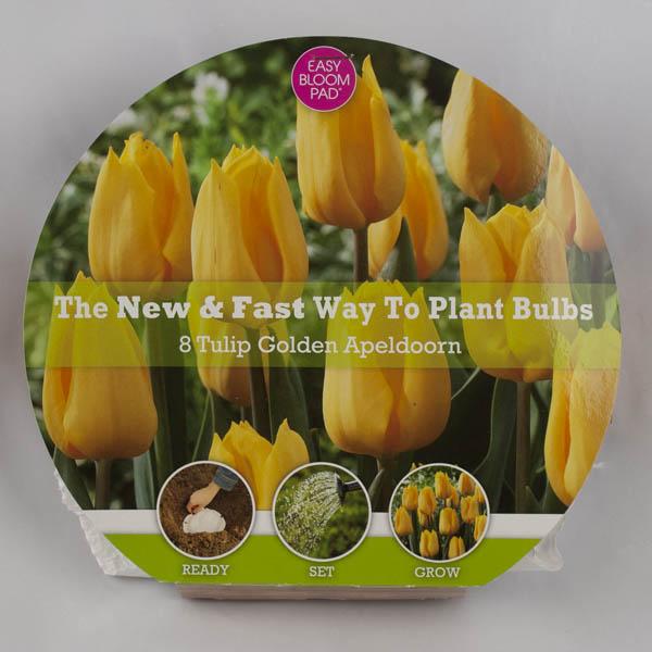 Image of Golden Apeldoorn Tulip Easy Bloom Pad