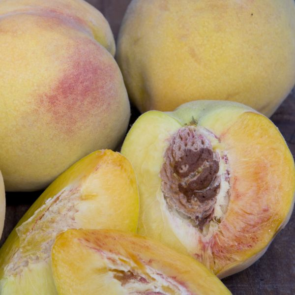 Golden Jubilee Peach