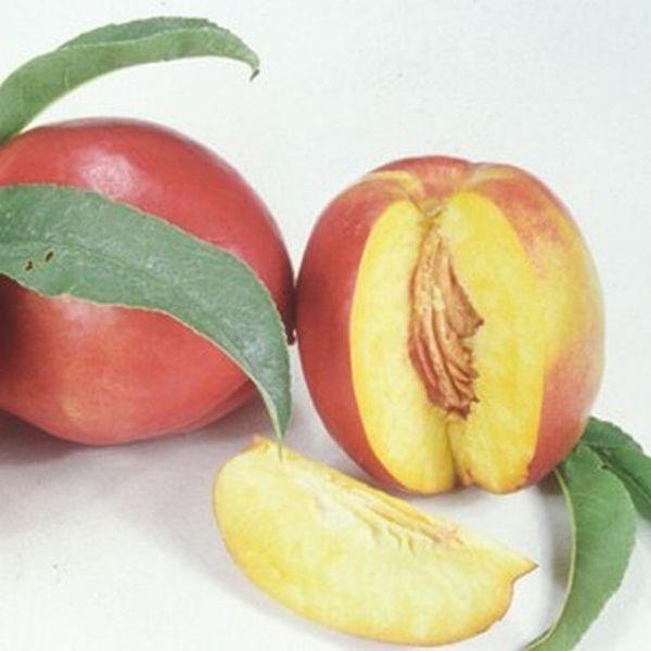 Independence Nectarine