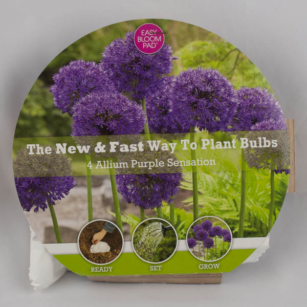 Allium Purple Sensation Easy Bloom Pad