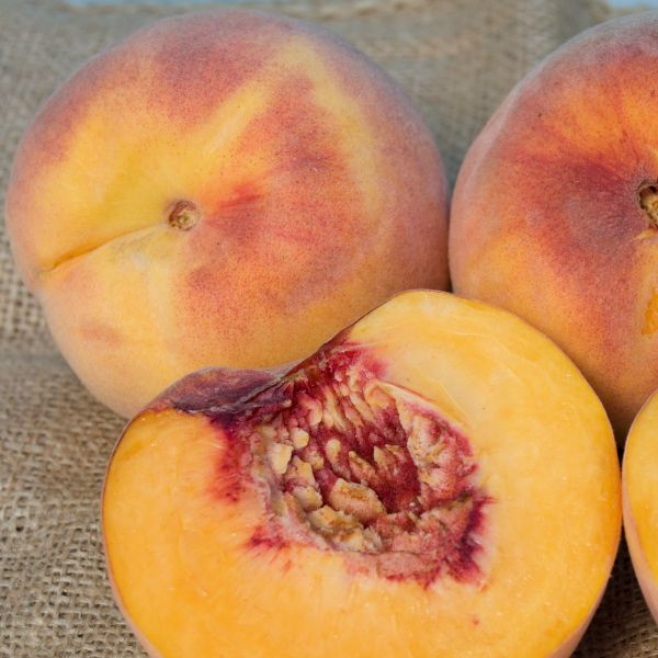 Rio Oso Gem Peach Tree
