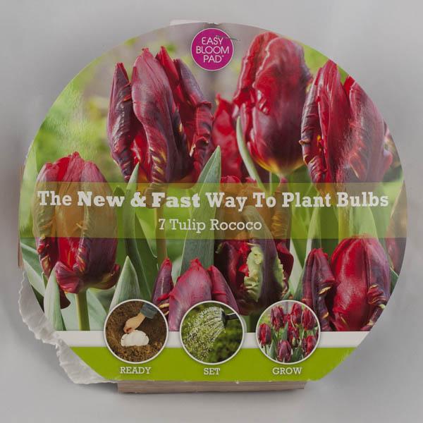 Rococo Tulip Easy Bloom Pad