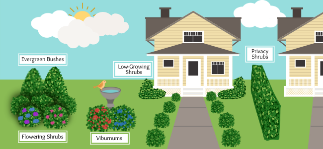 how to use bushes and hedges in your front yard