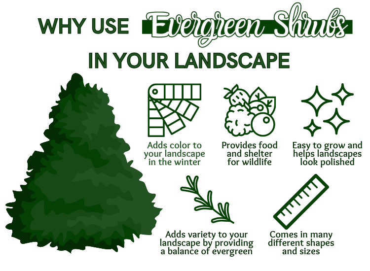 How to Use Evergreen Shrubs in the Landscape