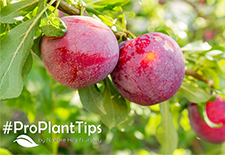 Best Fruit Trees for Your Colder Climate