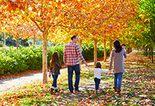 The Best of Fall Colored Foliage