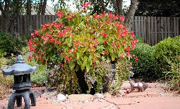 New Trends in Container Gardening – Creative DoorScapes