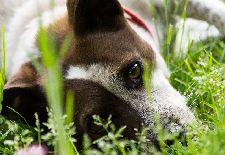 How to Make a Dog-Friendly Backyard