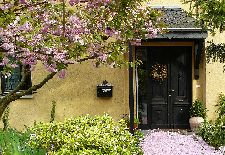 Care Tips for Small Ornamental Trees in Your Landscape