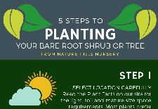 5 Steps to Planting Your Bare Root Shrub or Tree