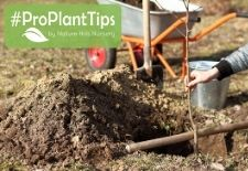 #ProPlantTips on Planting Fruit Trees