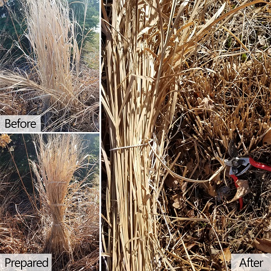 When To Prune Ornamental Grasses Ornamental grass pruning in spring workwithnaturefo