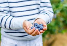 Simple Tricks to Make Blueberries Easy to Grow