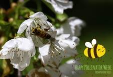 Create Beautifully Useful Pollinator Gardens