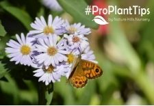#ProPlantTips on Preparing a Feast for Your Pollinators!