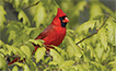Best Botanical for Backyard Birds