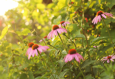 Top Trends In Using Native Plants In Front Yard Landscapes