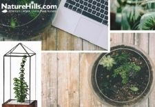 Terrariums For Plants & How To Build One!