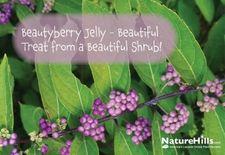 Beautyberry Jelly - Beautiful Treat from a Beautiful Shrub!