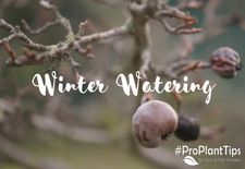 #ProPlantTips for Care: The Importance of Winter Watering!