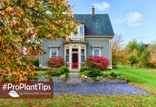 Top 5 Shrubs For Fall Color