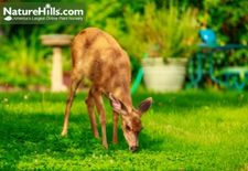 Deer Resistant Plants For The South