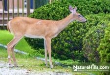 Deer Resistant Plants For The West