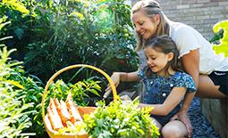 Design Tips For Edible Gardening