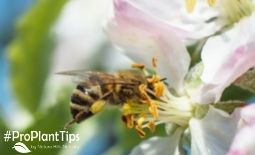 Fruit Tree Pollination:  Does Your Fruit Tree Need a Friend?